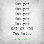 Avocado Lifecycle